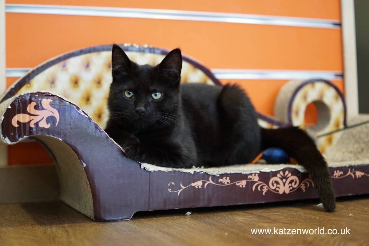 Our visit to Kitty Café - Nottingham: Cute or Naughty?